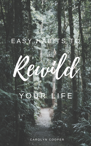 easy habits to Rewild Your life